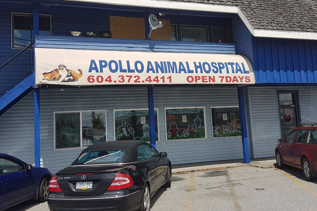 ApolloAnimalHospital